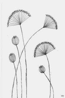 Umbelliferaceae von dieroteiris