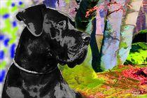 Deutsche Dogge Bunt by Sandra  Vollmann