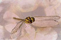 Flug der Libelle by Petra Dreiling-Schewe