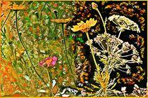 Blumencomposition von Sandra  Vollmann