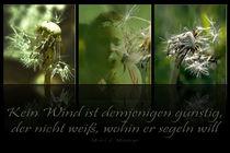 Dandelion - Written in the wind by Chris Berger
