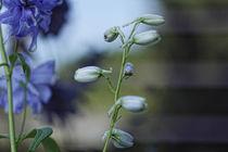 Light Blue by Petra Dreiling-Schewe