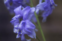 Blue by Petra Dreiling-Schewe