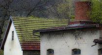 Hausdach mit Birken von ysanne