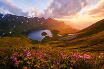Summer Sunlight by Andreas Hagspiel