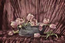 Zarte Tulpen  von Claudia Evans