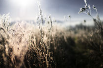 'Feld im Winter' by Maik Pötschke