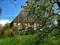 Frühling auf dem Land by assy