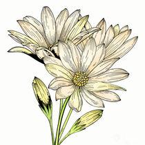 Daisy Flowers von mikart