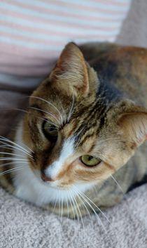 Katzendame von art-dellas