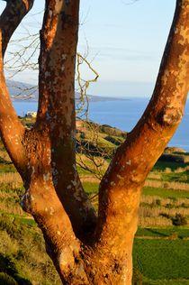 Abendlicht mit Baum von art-dellas