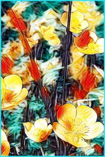 Hahnenfuß Wiesenblumen von Sandra  Vollmann
