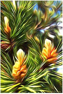 Natur Details Kiefer by Sandra  Vollmann