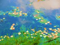 Autumn leaves on water 1 von lanjee chee