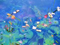Autumn leaves on water 2 by lanjee chee