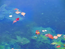 Fall leaves on river 3 von lanjee chee