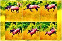Pferde Power Freude von Sandra  Vollmann