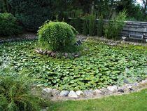 Seerosen Garten-Teich by assy