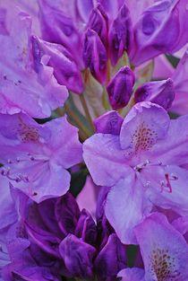 Rhododendron... 6 by loewenherz-artwork