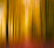 Motion Blur Forest