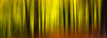 Motion Blur Forest by h3bo3