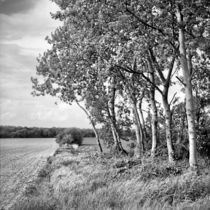 Calenberger Land X von Nils Volkmer