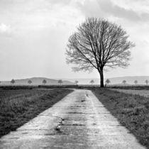 Calenberger Land IX by Nils Volkmer