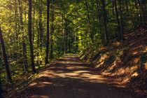 Forest way von h3bo3
