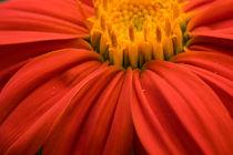 Flower by h3bo3
