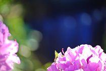 Rhododendron... 13 von loewenherz-artwork