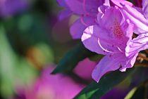 Rhododendron... 12 von loewenherz-artwork