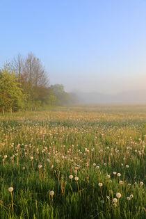 Frühlingswiese mit Nebel von Bernhard Kaiser