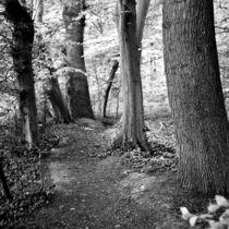 Weg 1 by Nils Volkmer