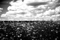 Am Feld by Bastian  Kienitz