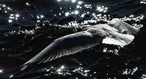 seabird by bazaar