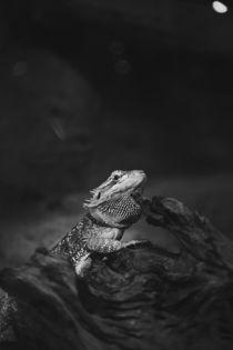 reptile photo by bazaar