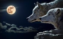 wolf and moon by bazaar