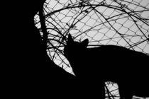 Cat Silhoutte von June Buttrick