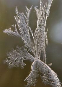 Frosty window von June Buttrick