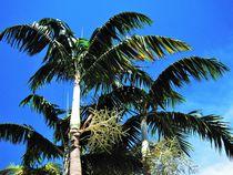 Palmen und blauer Himmel by assy