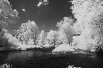 Infrared Landscape  by dagino
