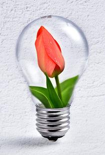Tulpe in Glühbirne von Peter Bergmann