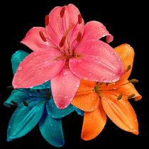 Colourful Lillies von Bill Pound