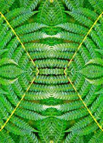 Farn im Spiegelbild 2 von kattobello