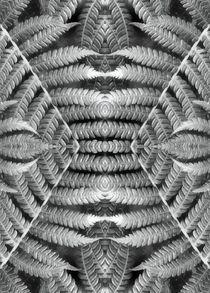 Retro Farn im Spiegelbild 3 von kattobello