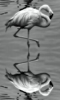 Retro Flamingo mit Spiegelbild von kattobello