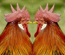 Hahnen Duell by kattobello