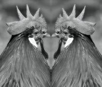 Retro Hahnen Duell von kattobello