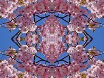 Kirschblüten Fantasie 1 von kattobello