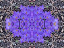 Krokus Traum 2 von kattobello